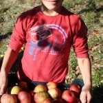 recolte-pommes