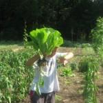 chasse-au-legume-du-jardin