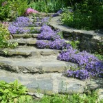 escalier-du-jardin