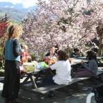 gouter-et-magnolia-en-fleur